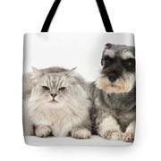 Blue-point Kitten & Miniature Schnauzer Tote Bag