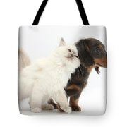 Blue-point Kitten And Dachshund Pup Tote Bag