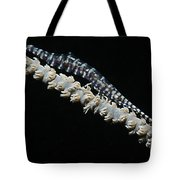 Blue Sawtooth Shrimp On Whip Coral Tote Bag