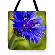 Blue Single Cornflower Tote Bag