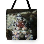 Blue Spotted Harlequin Shrimp, Bali Tote Bag