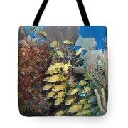 Blue Striped Grunts Schooling Tote Bag