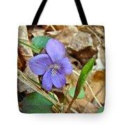 Blue Violet Wildflower - Viola Spp Tote Bag