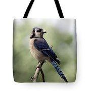 Bluejay - Bird Tote Bag