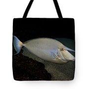 Bluespine Unicornfish Tote Bag