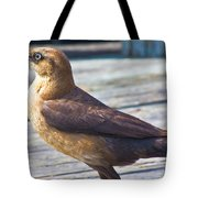 Boat Tail Grackle Tote Bag