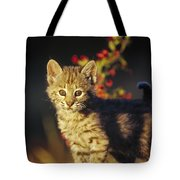 Bobcat Kitten Standing On Log North Tote Bag by Tim Fitzharris