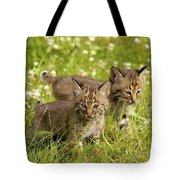 Bobcat Kittens Tote Bag by John Pitcher