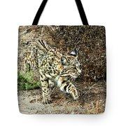 Bobcat Stalking Prey Tote Bag