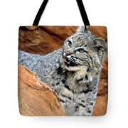 Bobcat With A Smile Tote Bag