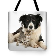 Border Collie And Kitten Tote Bag