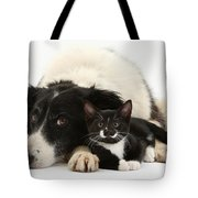 Border Collie And Tuxedo Kitten Tote Bag