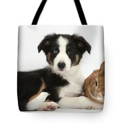 Border Collie Pup And Netherland-cross Tote Bag