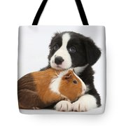 Border Collie Pup And Tricolor Guinea Tote Bag