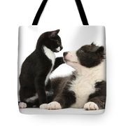 Border Collie Pup And Tuxedo Kitten Tote Bag
