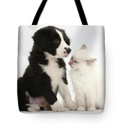 Border Collie Pup And White Kitten Tote Bag