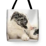 Border Collie Puppy With Rough-haired Tote Bag