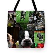 Boston Terrier Photo Collage Tote Bag