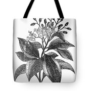 Botany: Cinnamon Tree Tote Bag