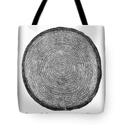 Botany:  Fir Tree Trunk Tote Bag