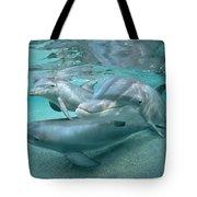 Bottlenose Dolphin Underwater Trio Tote Bag