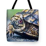 Box Turtle 1 Tote Bag