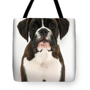 Boxer Pup Tote Bag by Mark Taylor