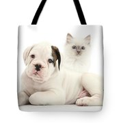 Boxer Puppy And Blue-point Kitten Tote Bag