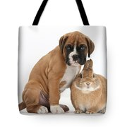 Boxer Puppy And Netherland-cross Rabbit Tote Bag