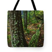 Bracket Fungi  On Pine At Granite Ridge Tote Bag