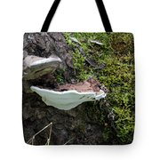 Bracket Fungus Tote Bag