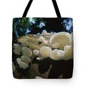 Bracket Fungus Favolus Brasiliensis Tote Bag