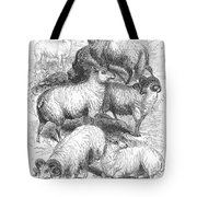 Breeds Of Sheep, 1841 Tote Bag