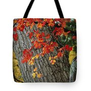 Bright Red Maple Leaves Against An Oak Tote Bag