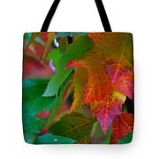 Brilliant Red Maple Leaves Tote Bag