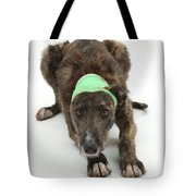 Brindle Lurcher Wearing A Bandage Tote Bag