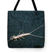 Bristle-tail, A Rare Cave Invertebrate Tote Bag