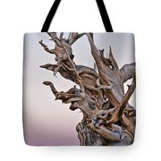 Bristlecone Pine - Early Morning - 1 Tote Bag