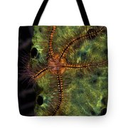 Brittle Star On Sponge, Belize Tote Bag