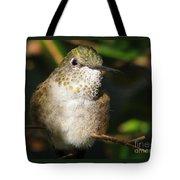 Broadbill Hummingbird Tote Bag