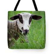 Brown And White Sheep Tote Bag