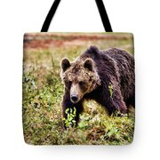 Brown Bear 210 Tote Bag