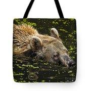 Brown Bear Swimming Tote Bag