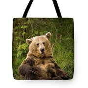 Brown Bear Ursus Arctos, Asturias, Spain Tote Bag