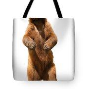 Brown Bear Ursus Arctos Tote Bag