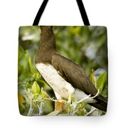 Brown Booby Sula Leucogaster Tote Bag
