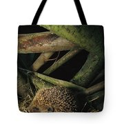 Brown-breasted Hedgehog Erinaceus Tote Bag