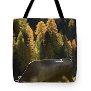 Brown Cow In Valle Lunga Tote Bag