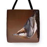 Brown-headed Nuthatch - Little Nutty Tote Bag