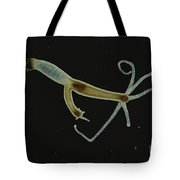 Brown Hydra With Bud Forming Lm Tote Bag